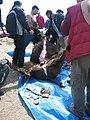 Dépeçage d'un bison, Pine Ridge, South-Dakota, USA.jpg