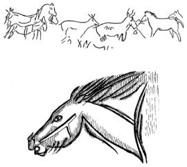 D279- figuration d'animaux - grotte de combarelles. - L1-Ch5.png