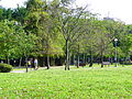 Daan Park Southeast Part Grass and Woods.jpg