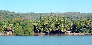 Gangavalli River - A typical view.