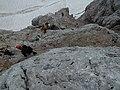 Dachstein Randkluftklettersteig.jpg