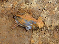 Dallol-Ethiopie-Oiseau mort.jpg