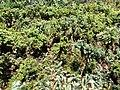 Daniel Pavon Cuellar Miniature Forest Austin Texas.jpg