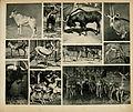 Das thierleben in Schönbrunn (Plate 35) (6096781278).jpg