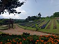 December Garden, Pyin Oo Lwin.jpg