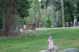 National Register of Historic Places listings in southern Westchester County, New York - Image: Deer among the dead