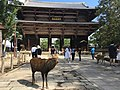 Deer in front of Nandaimon at Todaiji.jpg