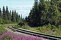 Denali NP rail tracks.jpg
