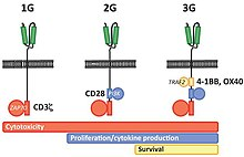 Chimeric antigen receptor - Wikipedia