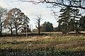 Derelict parkland, Darley Green - geograph.org.uk - 2191639.jpg