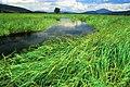 Deschutes National Forest Big Marsh (36951231901).jpg