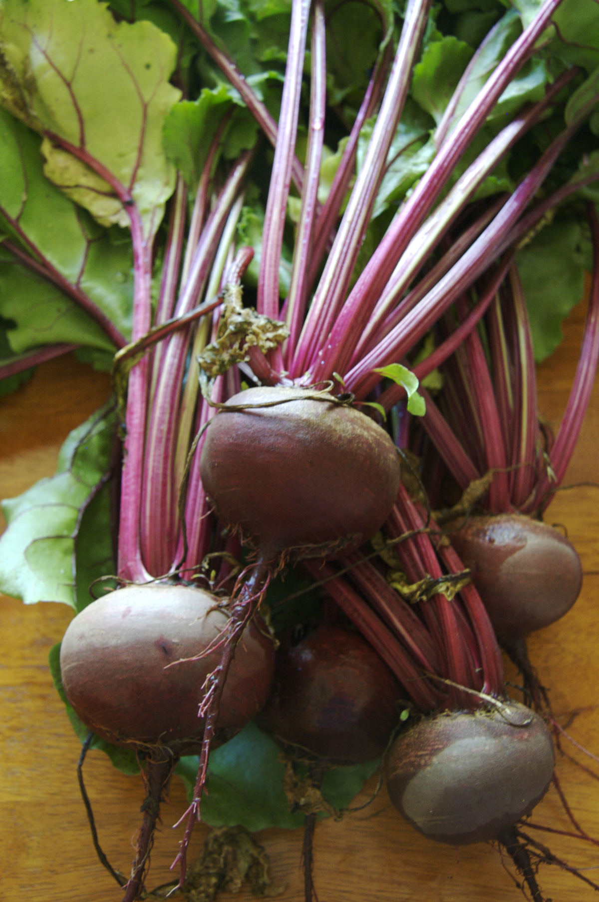 Beetroot - Wikipedia