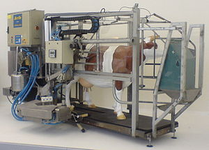 Automatic milking - A Fullwood Merlin AMS unit from the 1990s, exhibit at the Deutsches Museum in Germany