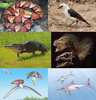 Sauria suborder of reptiles