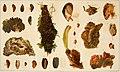 Die Mytiliden des Golfes von Neapel und der angrenzenden Meeres-Abschnitte, I. Teil (1902) (20747806959).jpg