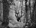Dirfi, forest 1.jpg
