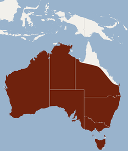 Distribution of Nyctophilus geoffroyi.png