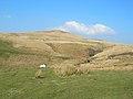 Doughty Farm Road - geograph.org.uk - 378943.jpg