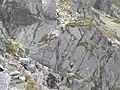 Drabinka na Koziej przełęczy - panoramio.jpg