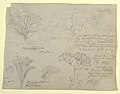 Drawing, Series of Botanical Studies including an Alligator and a Monstrous Tree, seen from the Rio Magdalena, Colombia, 1853 (CH 18193677).jpg