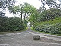 Driveway to Ringdufferin House - geograph.org.uk - 752503.jpg
