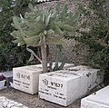 Dvora and Shraga Netzer tomb.JPG