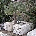Dvora and Shraga Netzer tomb.JPG