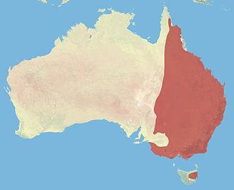 Eastern grey kangaroo - Image: Eastern Grey Kangaroo Range