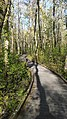 Ebenezer Swamp Boardwalk.jpg