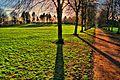 Eglinton Tree Shade - panoramio.jpg