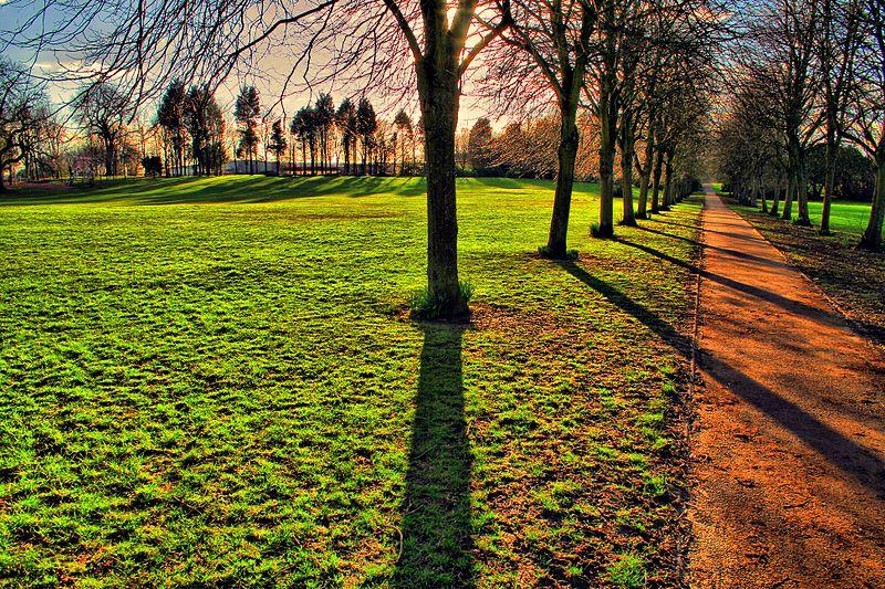 File:Eglinton Tree Shade - panoramio.jpg
