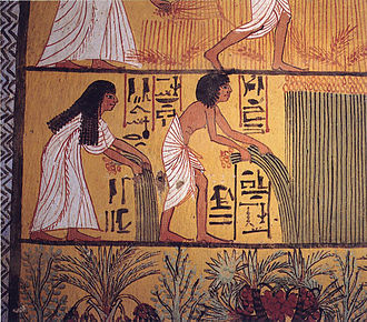 Ancient Egyptian literature - Egyptian peasants harvesting papyrus, from a mural painting in a Deir el-Medina tomb dated to the early Ramesside Period (i.e. Nineteenth dynasty)