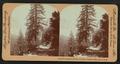 El Capitan and Bridal Veil Falls, Yosemite Valley, Cal. U.S.A, by Singley, B. L. (Benjamin Lloyd).png