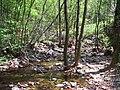 El bosque de hayas - panoramio.jpg