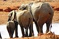 Elefanten mit schönen Popo - panoramio.jpg