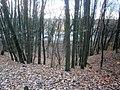 Entenschnabel-ObenFrohnauAmRosenanger-AufDerEiszeitDüne-BlickZurChaussee3.jpg
