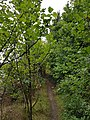 Epping Forest 20170727 111529 (49375044857).jpg