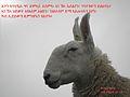 Eritrean bible verses (25).jpg