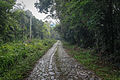 Estrada Real do Comércio na Reserva Biológica Federal do Tinguá 02.jpg