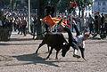 Fêtes de Bayonne-Courses de vaches (1)-19650808.jpg