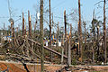 FEMA - 28910 - Photograph by Mark Wolfe taken on 03-08-2007 in Georgia.jpg