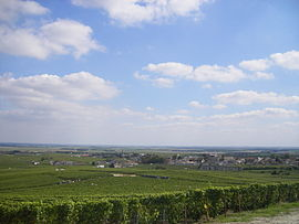 A general view of Avize and its vineyards