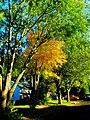 Fall Foliage in Madison - panoramio (3).jpg