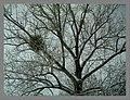 February Winter Light Glottertal - Mythos Black Forest Photography 2013 - panoramio (7).jpg