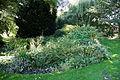 Feeringbury Manor garden flower and shrub bed, Feering Essex England.jpg