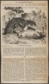 Felis leo - 1865 - Print - Iconographia Zoologica - Special Collections University of Amsterdam - UBA01 IZ22100067.tif