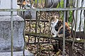 Feral cat at Vsesvyatskoye cemetery, Krasnodar.jpg