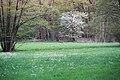 Feuchtwiese Heiligen 01.jpg