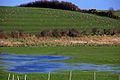 Fields, floods and gulls near Portaferry - geograph.org.uk - 349162.jpg