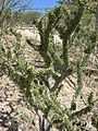 Fingerklip, Namibia (3038192108).jpg